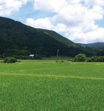 知覧 田園風景