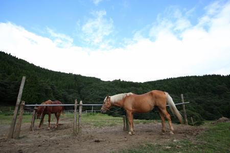 霧島観光 霧島乗馬 サウスヒル牧場