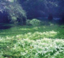 霧島の『七不思議』 5「御手洗川」の不思議